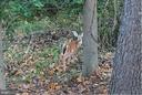 Woods full of wildlife - 5731 MASON BLUFF DR, BURKE