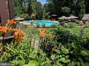Pool and gardens - 37670 CHAPPELLE HILL RD, PURCELLVILLE