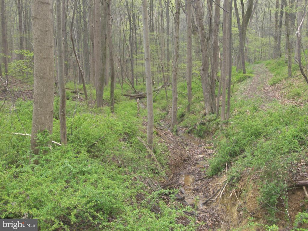 Private Woodland Park - 14515 SHIRLEY BOHN RD, MOUNT AIRY