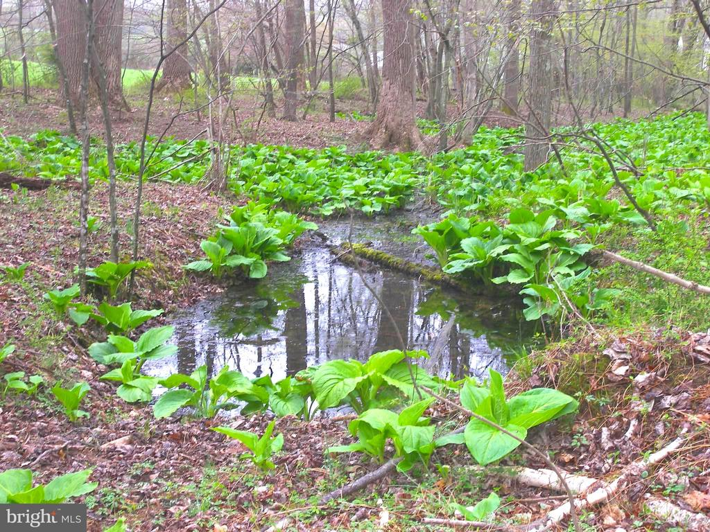 Frog Pond - 14515 SHIRLEY BOHN RD, MOUNT AIRY