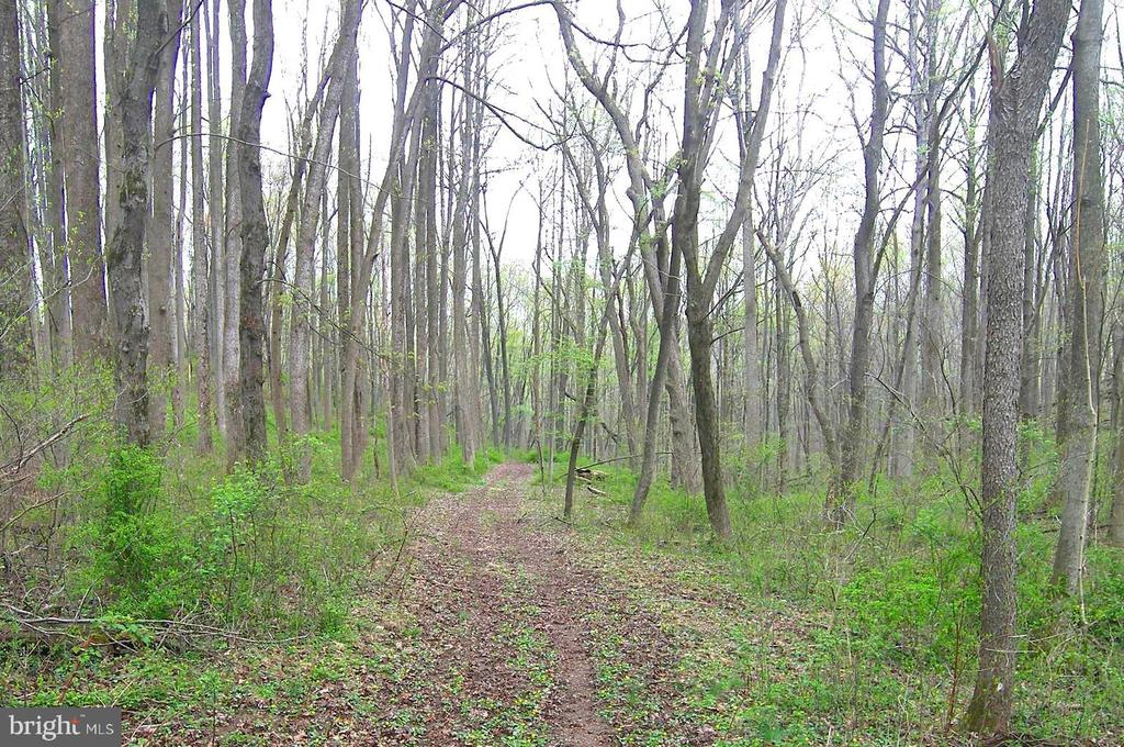 Private Woodland Grounds - 14515 SHIRLEY BOHN RD, MOUNT AIRY