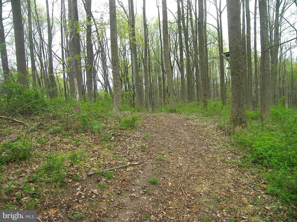 Forest Banking Permits Select Hardwood Harvesting - 14515 SHIRLEY BOHN RD, MOUNT AIRY