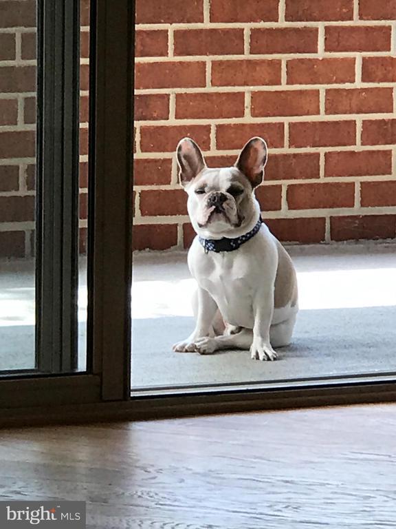 Pet Friendly Dak Approved - 1276 N WAYNE ST #130, ARLINGTON