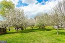 Orchard - 19525 TELEGRAPH SPRINGS RD, PURCELLVILLE