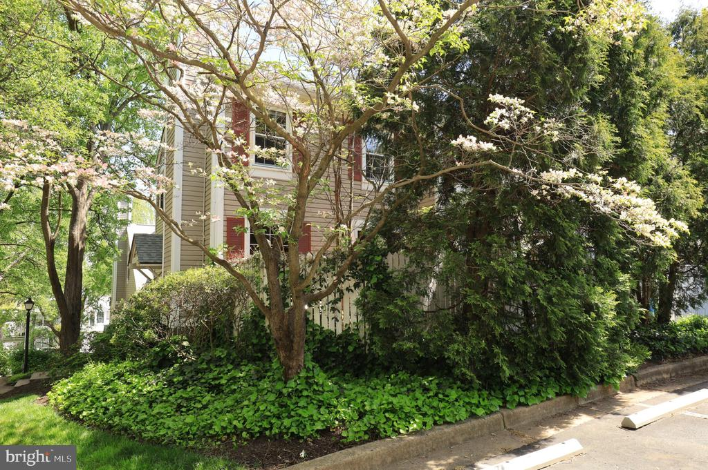 Lush Landscaping Provides Privacy - 2917 S WOODSTOCK ST #A, ARLINGTON