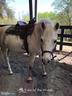 Equestrian center - 300 MT PLEASANT DR, LOCUST GROVE