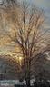trees - 20782 LUCINDA CT, ASHBURN