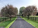 Tree lined driveway - 12645 OLD FREDERICK RD, SYKESVILLE