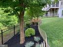 Rear  yard with in-ground sprinkler - 17037 SILVER ARROW DR, DUMFRIES