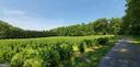 Fields/Vineyard - 7670 TALBOT RUN RD, MOUNT AIRY