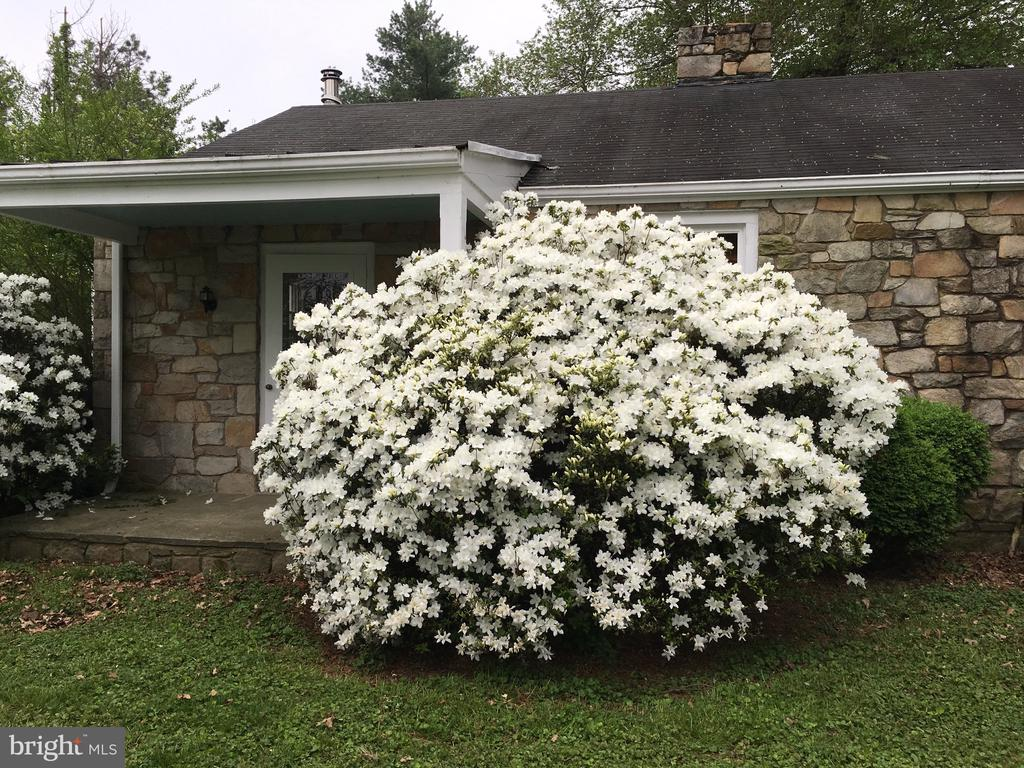 Tenant house plantings burst with flowers - 21943 ST LOUIS RD, MIDDLEBURG