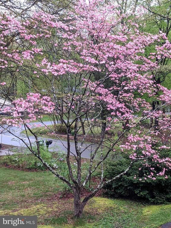 Well established landscaping - 1227 AQUIA DR, STAFFORD