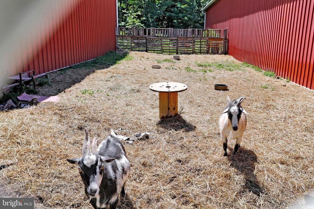GOATS!!! - 5201 RELIANCE, MIDDLETOWN