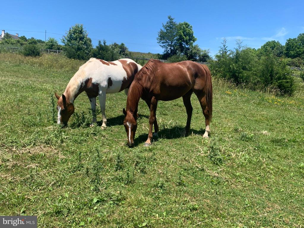 Anyone up for a private lesson or trail ride?? - 5201 RELIANCE, MIDDLETOWN