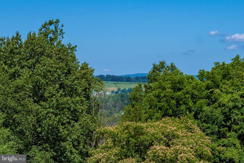 Vista views especially during spring - 10740B WOODSBORO RD, WOODSBORO