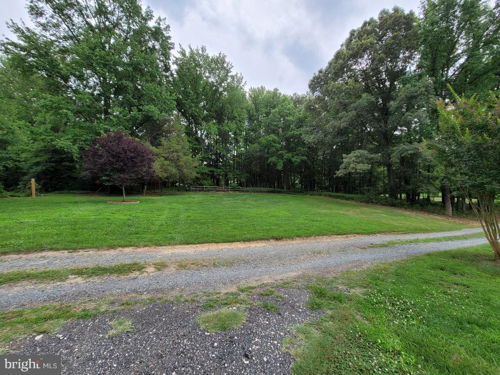 Front yard and future horse area - 81 ESTATE ROW, STAFFORD