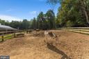 Perfect for easy keepers like the donkeys - 4346 BASFORD RD, FREDERICK