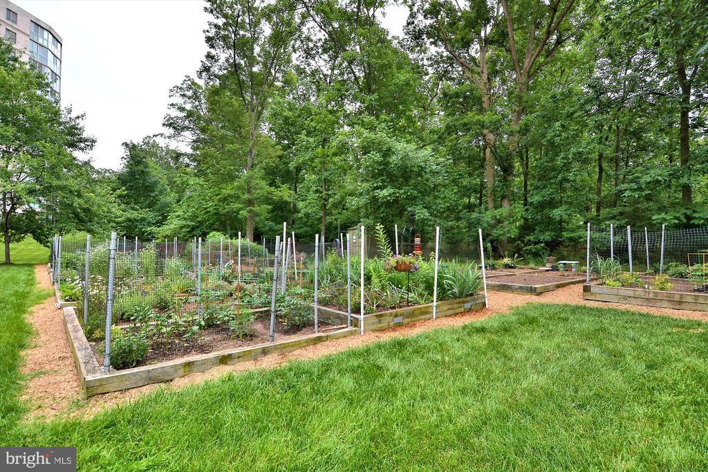 Garden plots for your green thumb! - 19375 CYPRESS RIDGE TER #904, LEESBURG
