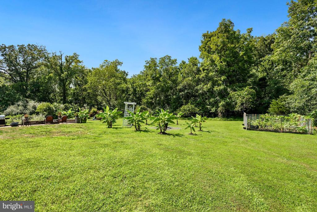 Backyard Garden and Banana Trees - 41192 BLACK BRANCH PKWY, LEESBURG