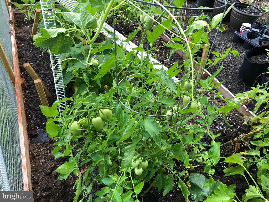 Vegetable Garden in Bloom - 41192 BLACK BRANCH PKWY, LEESBURG