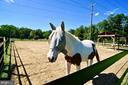 Outdoor Horse Pen - 107 NINA CV, STAFFORD