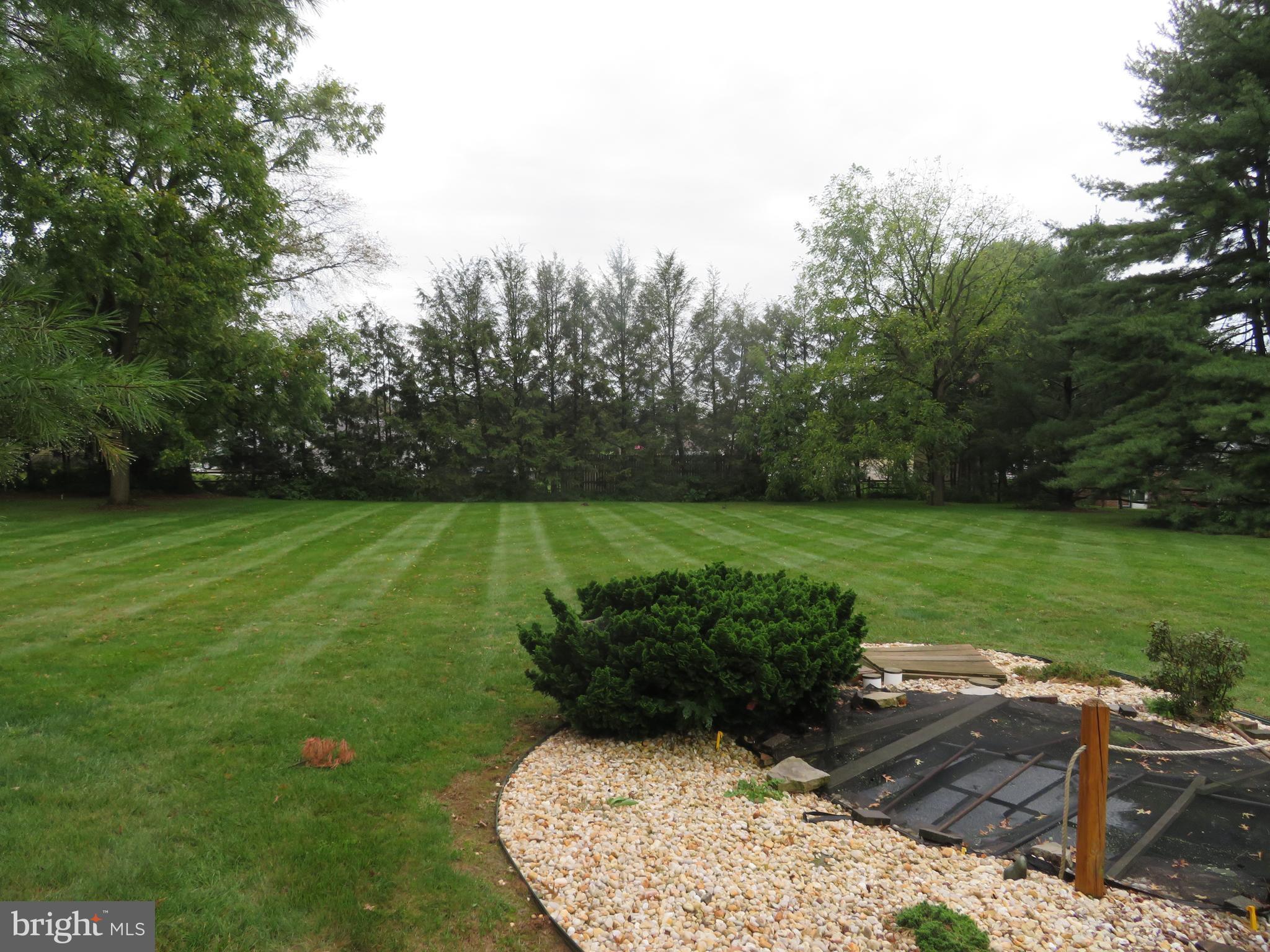 Yard view!