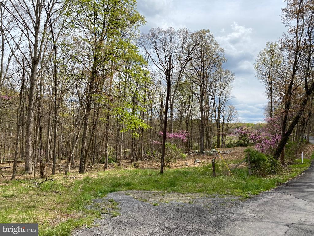 Beautiful Wooded Lot - Fronting Woodmont Road and Gloyd Court - 4.36 wooded and unrestricted acres.   Overlooks the neighbor's pond.