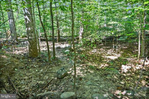 49 Deer Haven Ln Bluemont VA 20135