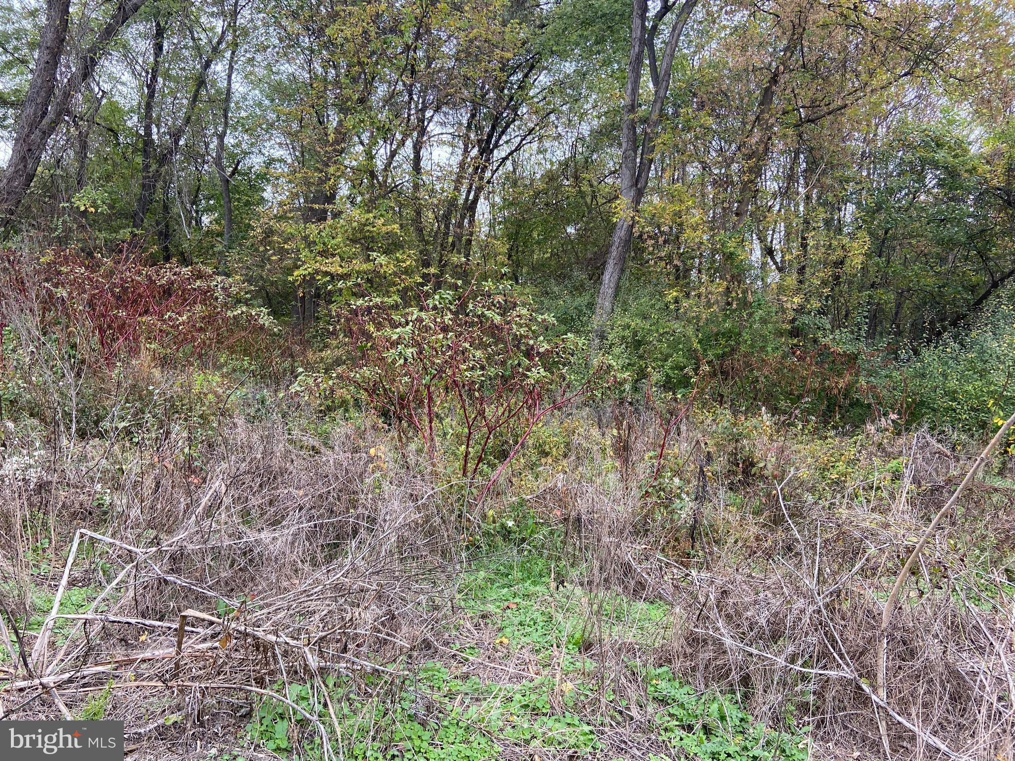 Rare 2 acre  lot in Mechlenburg Heights! Pretty much all wooded! City water but will need perked for a septic system.  Only 5 minutes from Shepherd University and the corporation  of Shepherdstown.   OWNERS SAY BRING THEM OFFERS!