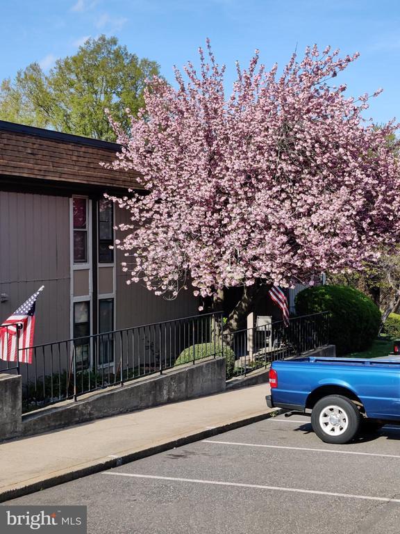 8500 Barrington Ct #D, Springfield, VA 22152