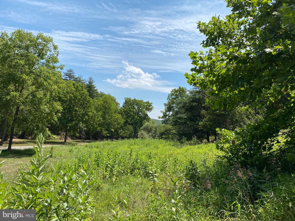 4.50 ACRES -  Partly open for your cows and or horse plus a good building spot at the top.   Located South of Berkeley Springs close to Cacapon State Park.