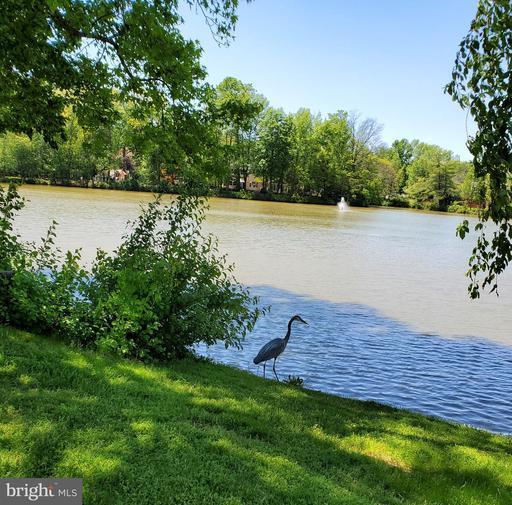 7147 Lake Cove Dr Alexandria VA 22315
